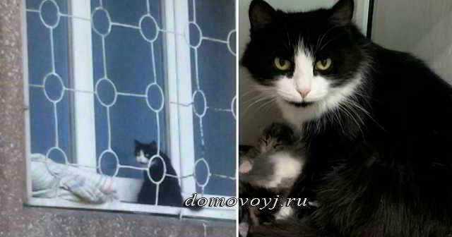 Родился ребенок и кошка стала лишней: беременная Муська две недели просидела на подоконнике в надежде, что ее пустят домой!