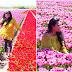 Ladang Tulip di Desa-Desa Belanda