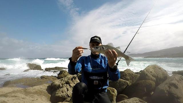 LUBINA - Buscando lubinas en distintos escenarios de pesca