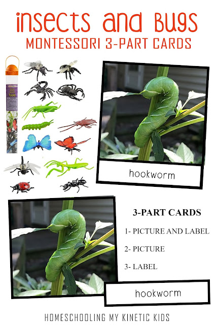 Montessori-inspired 3-part cards to match the Safari Ltd insect toob with bonus hands-on ideas for learning more about bugs.