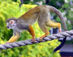 Dunia Sains Tahun 3 Tajuk Ciri Haiwan Haiwan yang berekor