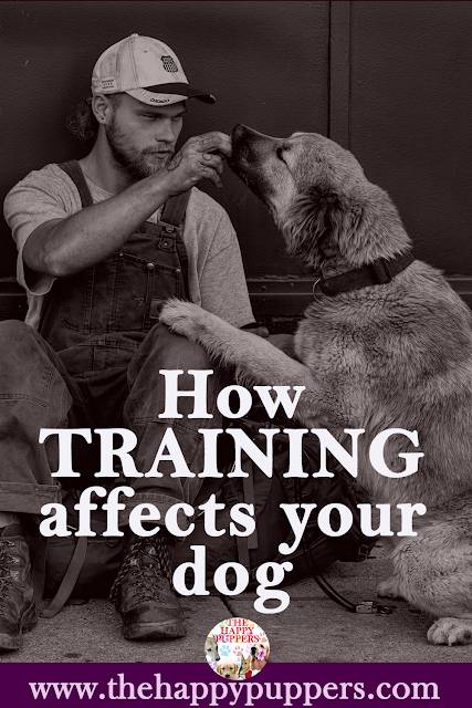 How training affects your dog