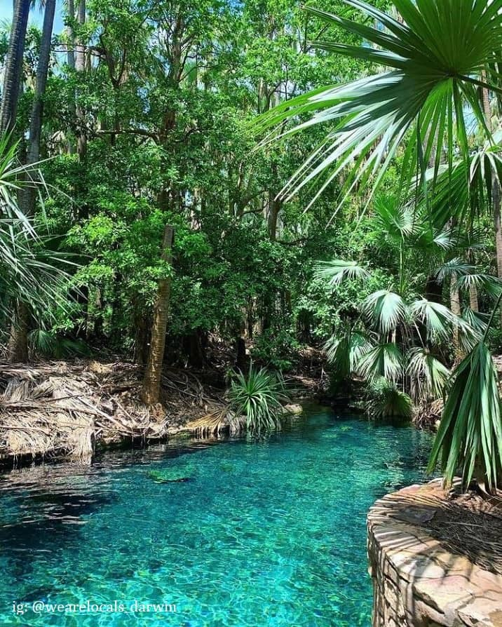 a picture of a thermal spring in Darwin, Northern Territory