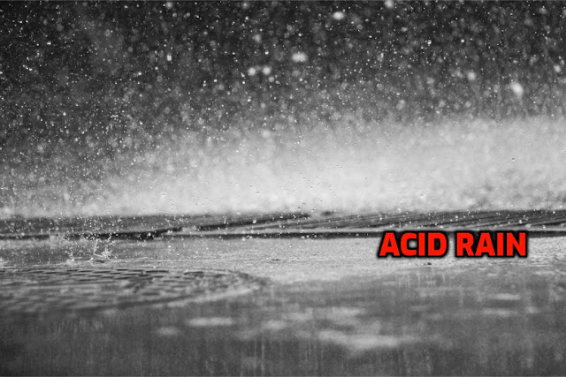 Acid rain experiment for science fair projects for 8th grade1