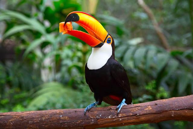 Rừng mưa Amazon chiếm hơn 50% rừng mưa của Trái Đất. Đây cũng là nơi sinh sống của nhiều loài động, thực vật quý hiếm. Các nhà khoa học đã tìm thấy 10% số loài động vật được phát hiện trên thế giới tại nơi này. Vì thế, người ta ví rừng mưa Amazon như một khu bảo tồn thiên nhiên của Trái Đất. Tuy nhiên, nạn chặt phá rừng cũng như săn bắt động vật quý hiếm đang hủy hoại nơi này theo thời gian. Theo thống kê, khoảng 17% diện tích rừng Amazon đã biến mất trong 50 năm qua.