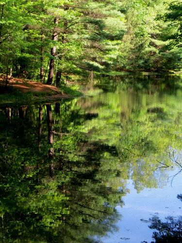 Carelton Creek pond