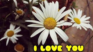 i love you card with daisy flower