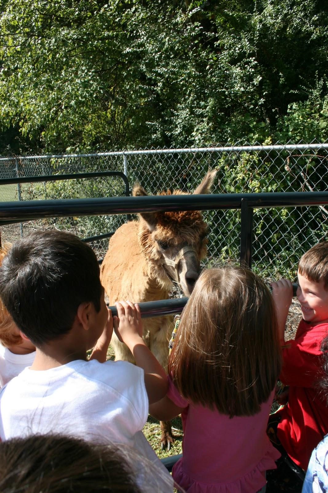 Mrs Mayas Kindergarten Llama Llama Red Pajama