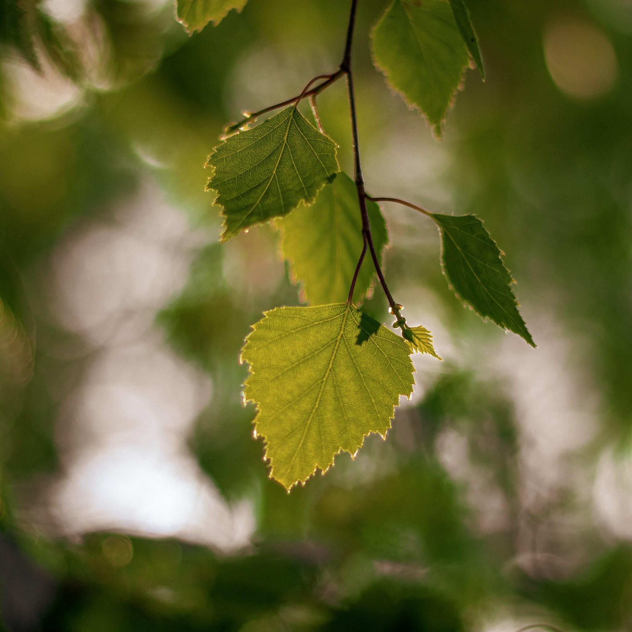 Spokój, tylko spokój nas uratuje — kwadratowy oddech, nerw błędny.