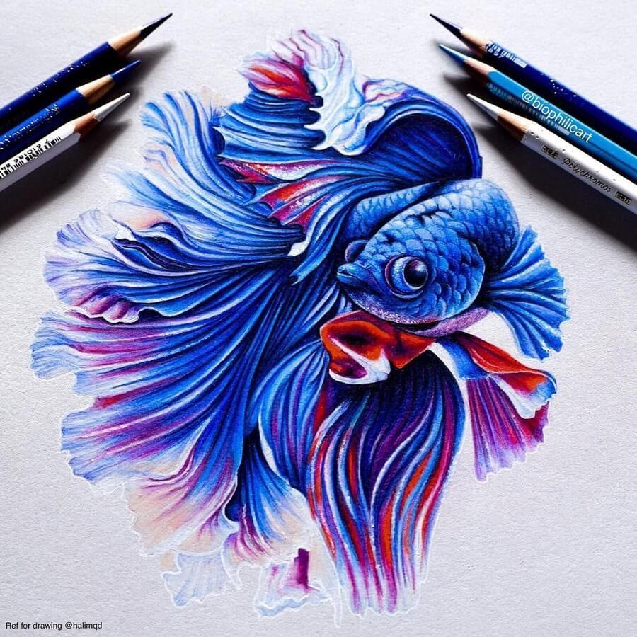 07-Siamese-fighting-fish-Sallyann-www-designstack-co