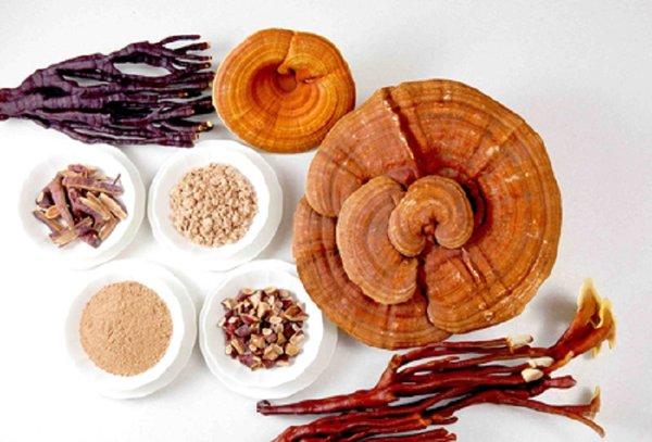 Sử dụng nấm linh chi với liều lượng thế nào?