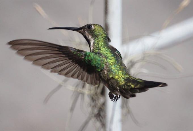 Zoologia | Aves