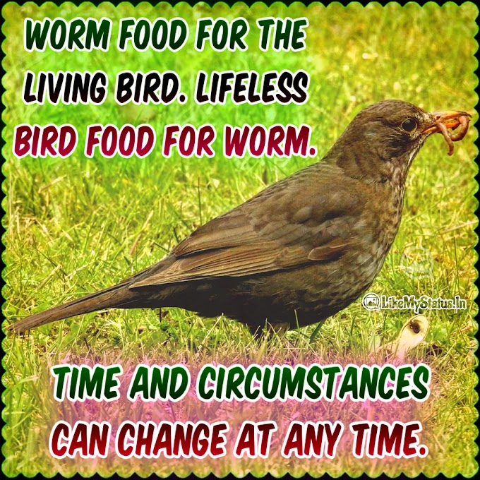 Worm food for the living bird