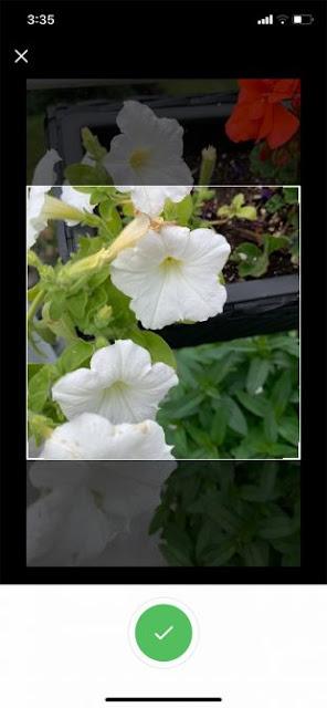 4) تطبيق  ++ Plant Identification