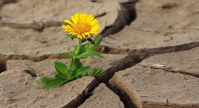 Lo Mío No Es Suerte Es Perseverancia Esfuerzo Y Sacrificio