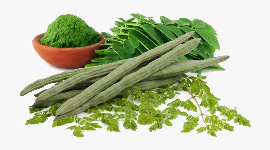 15 Benefícios da Moringa Oleifera à Saúde