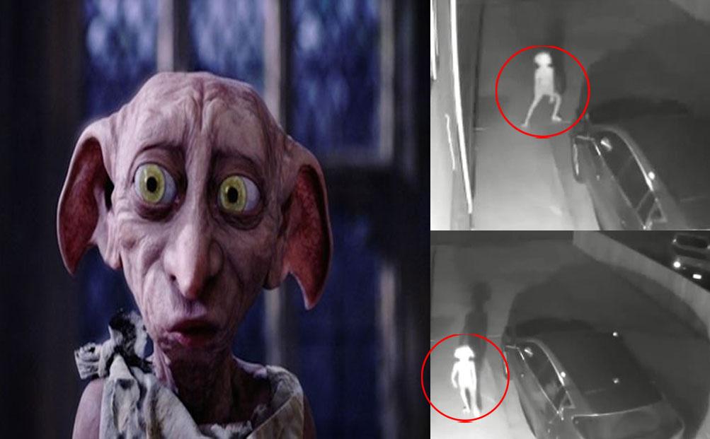 دوبي قزم ,Dobby is a free elf