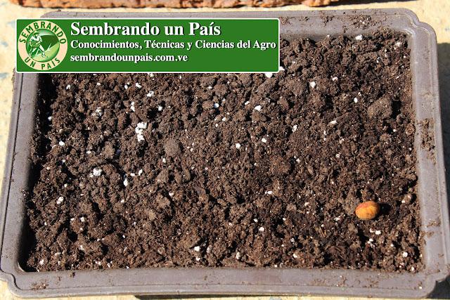 bandeja para semillero