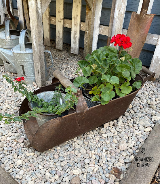 Photo of rusty grain scoop filled with potted plants