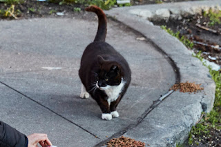 """Madison County SPCA NY ask NYPD to investigate """"Tuxedo Cat"""" the beloved Brooklyn cat killed in Brooklyn"""