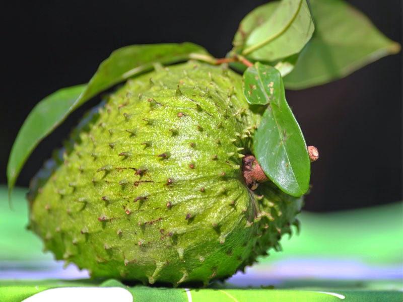 Buah yang satu ini juga populer degan nama buah durian belanda atau terkadang di kenal j Inilah Manfaat Buah Sirsak Untuk Kesehatan