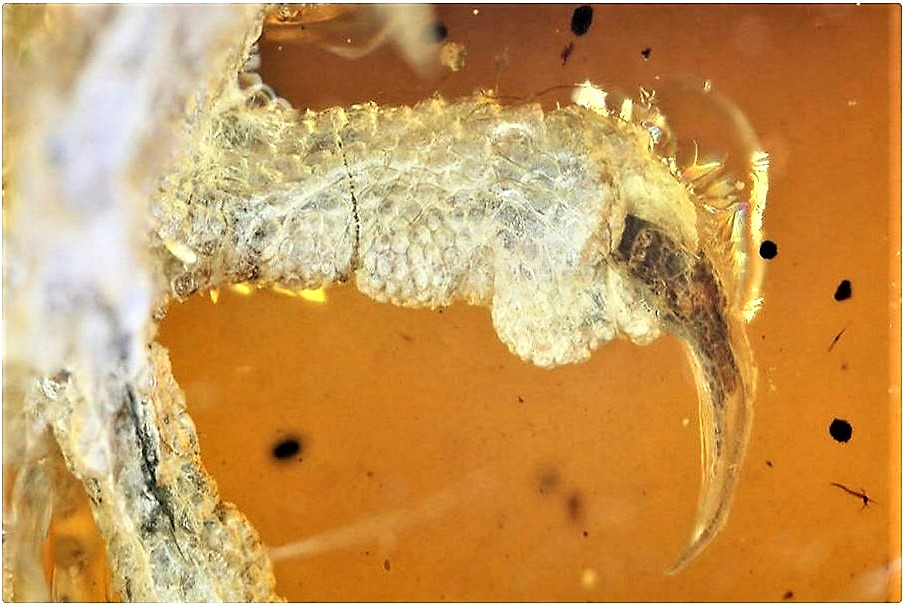 A skeleton of a prehistoric bird was discovered in Burmese amber