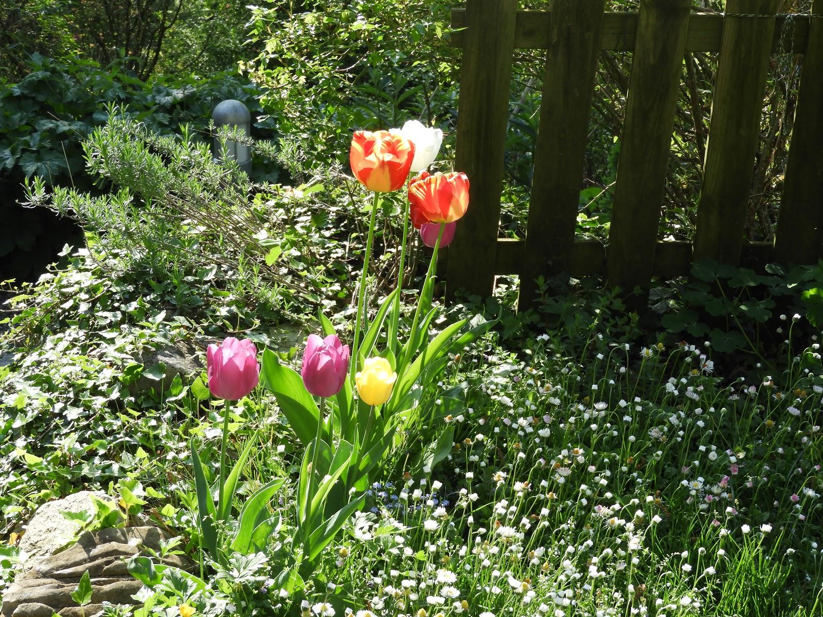 Sterne Der Erde Wie Man Einen Gesunden Gemuse Garten Plant Und Aufrechterhalt