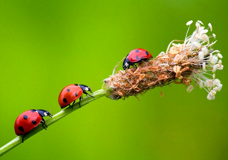 Bugs hd wallpapers, bugs hd wallpaper | Amazing Wallpapers