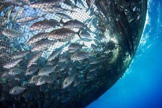 Kültür Balıkçılığı Bölümü Nedir Ne İş Yapar Maaşları