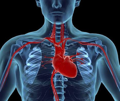 Cardiology is the medical specialty that deals with the detection Cardiology Definition : What Is Cardiology ?