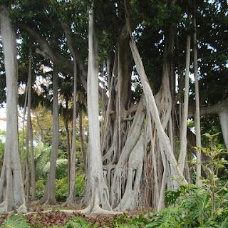 Jardín de Aclimatación de la Orotava en Tenerife, el segundo jardín botánico más antiguo de España, nuevo destino de Jardines con Historia