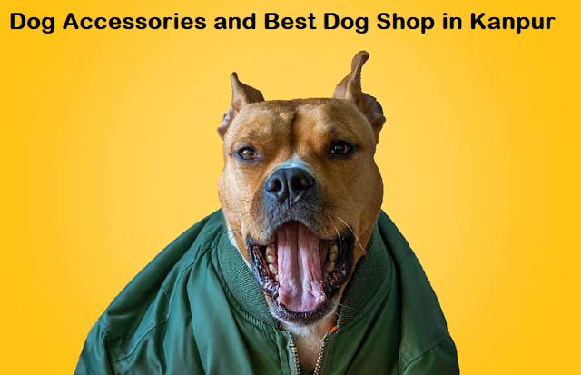 dog shop in kanpur, kanpur dog shops, dog shop near me kanpur, best dog shop in kanpur, dog price in kanpur