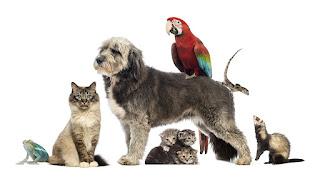 Hayvan Sevgisi ile ilgili Fotograflar ile ilgili aramalar hayvan sevgisi ile ilgili çizim  hayvan sevgisi ile ilgili resimle  hayvan sevgisi ile ilgili kolay çizimler  hayvan sevgisi ile ilgili yazılar  hayvan sevgisi ile ilgili atasözleri  çocuğun hayvan sevgisi ile ilgili sözler  hayvan sevgisi kompozisyon  hayvan sevgisi anlamı