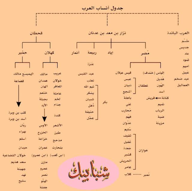 ماهو أصل العرب ؟  من هم العرب؟:-   كلمة عرب تعني في اللغة الماء الصافي شديد الجريان ، ومفردها عربي وجُمُوعها (عروب ، أعرب ، عُرُب ) ، والعرب هم أُمَّةٌ من البشر نشأت في شبه جزيرة العرب من الأصل السامي (نسبةً إلى سام بن نوح ) ، وقد عُرف عن العرب منذُ فجر التاريخ أنهم أهلُ الفصاحة والبلاغة ، ويزخر التاريخ العربي بالكثير من الشخصيات الأدبية في شتى نواحي الأدب ، واشتُهر العربي بالكثير من الصفات التي تُمَيزه عن أي إنسان آخر ، كالنخوة والكرم واعتزازه بكرامته وأُصوله العريقة .    نَمَط عَيش العرب:-     كانت حياة العرب الأوائل حياة غير مستقرة فقد اعتادوا على التنقل والترحال من مكان لآخر بحثاً عن الماء والعُشب ، ولذلك كان مسكنهم الخيام ولم يعرف المنازل الطينية إلا القليل منهم ، واشتغل العرب في رعي الأغنام والإبل فكانت مصدر عيشهم بالإضافة إلى الغنائم التي يتحصلون عليها من الغزو ، فالغزو أحد أصول حياتهم والذي كان يعتمد في المقام الأول على براعتهم في ركوب الخيل و تَفردهم في استخدام السيف والرمح .    أُصول العرب:-   لقد أجمع المؤرخون والباحثون في الأنساب على أن آدم هو أبو البشر وهو أول من عَمّر الأرض ، وجاء من بعده نسله وتكاثروا حتى جاء سيدنا نوح -عليه السلام -من نسل آدم ، ثم بعد ذلك وقعت معجزة الطوفان والتي على إثرها هلك كل البشر إلا من نجا مع نوح -عليه السلام - ، بعد هذه الحادثة يعتبر نوح -عليه السلام -هو الأب الثاني للبشر بعد آدم ،فجاء من نسله ثلاث أبناء وهو ( سام ، يافث ، حام )  ، وقد اتفق المؤرخون على أن كل أمم العالم قد تفرعت من نسل هؤلاء الثلاثة ، فكان العرب من نسل الابن الثاني (سام) ، أنجب سام خمسة أبناء هم (أرفخشذ ، لاوِذ ، إِرَمْ ، أشوذ ، غليم ) .    أقسام العرب:-   أجمع معظم النُسَاب والمؤرّخون على تقسيم أُمَّةُ العرب من حيث القِدَم إلى ثلاث طبقات هي:-   (العرب البائدة ، العرب المستعربة ، العرب العاربة )،   وقد اختلف المؤرخون في تسميتهم إلا أنّهم اتفقوا في المُجمَل على وجود هذا التقسيم ، كما اتّفق أغلب الرواة على تصنيف العرب حسب الأنساب إلى قسمين ،   وهم:-   القسم الأول العرب القحطانيّون:-   العرب القحطانيون يرجع أصلهم إلى اليمن .  القسم الثاني العرب العدنانيّون:-  العرب العدنانيون يرجع أصلهم إلى الحجاز.   وكلا القِسمَين كُتِب لنسلِهما النّجاة والبقاء بعد هلاك العرب ا