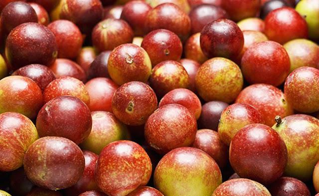 Camu camu berry