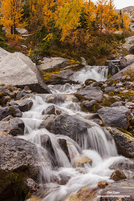 A cascading creek below fall larches in Bugaboo Provincial Park, British Columbia, Canada.