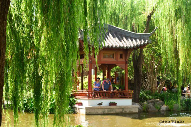 Chinese Garden of Friendship at Pyrmont Bay, Sydney Australia