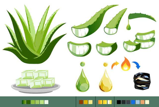 Aloe Vera can cure gum Disease