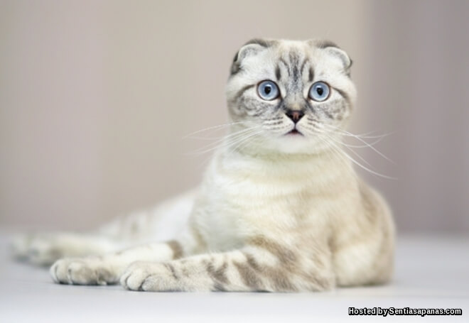 10 Baka Kucing Paling Mahal Di Dunia