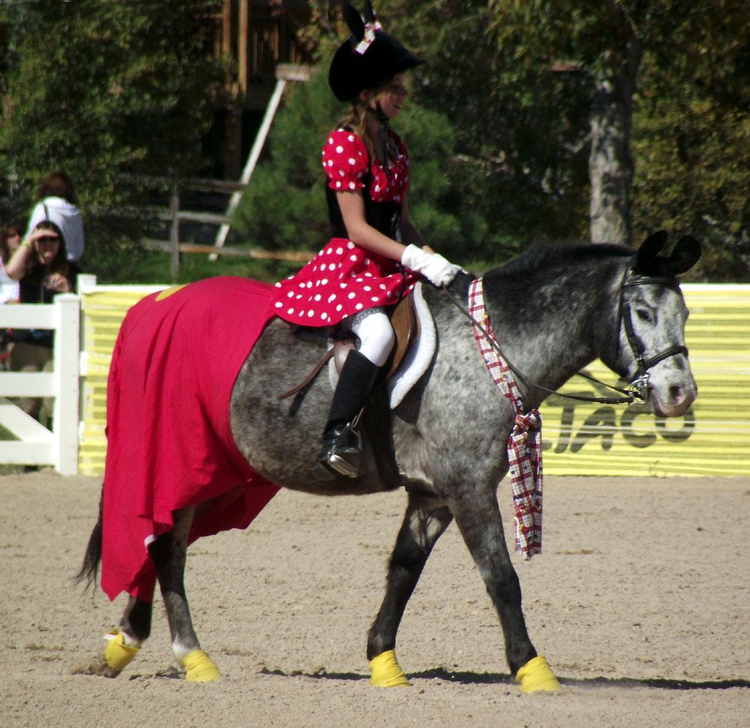 horse fancy dress | Sparrowgrass |Horse Fancy Dress Costumes