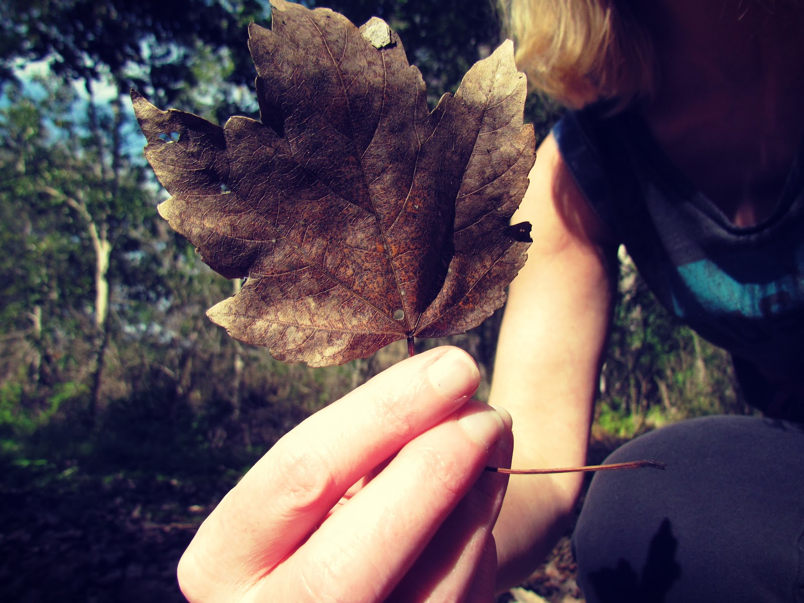 Energy Healing and Holistic Healing and a Hiker Holding a Crisp Golden Leaf in Autumn