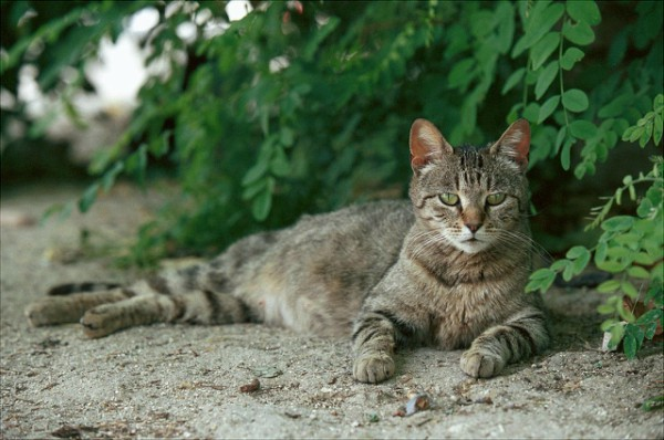cats madrid