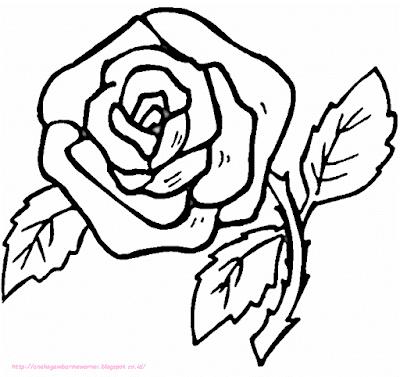 gambar bunga mawar - 14