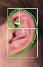Fibonacci para ganhar na Dupla-Sena 100% certo
