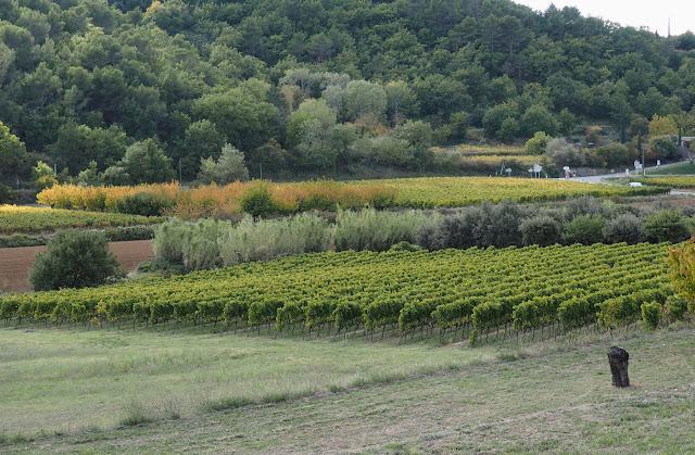 Прованс, Франция – виноградник (Provence, France – Vineyard)