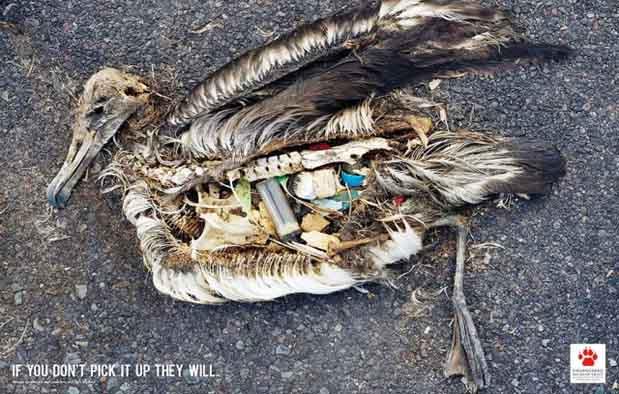 Contoh Iklan Bertema Lingkungan Hidup