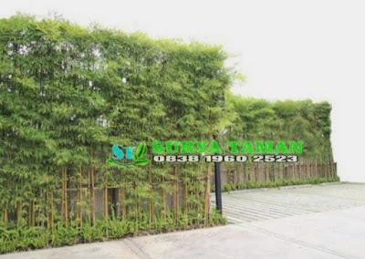 Jual pohon bambu jepang pagar di serang - Alby flora