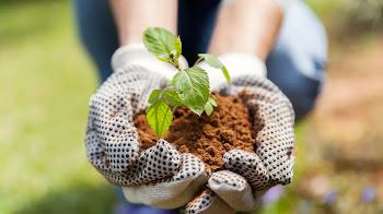 Herramientas útiles para mantener hermoso el jardín de tu hogar