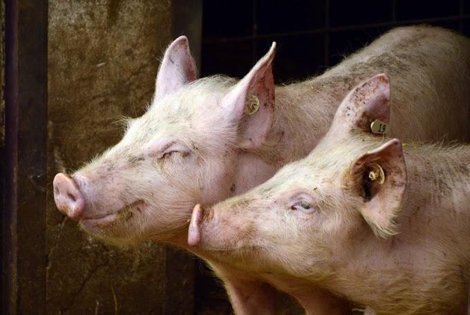 Liquidez do vivo diminui no BR, mas exportações da carne aumentam