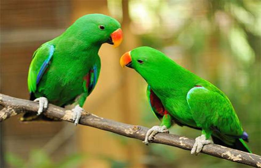 पक्षियों की तस्वीर